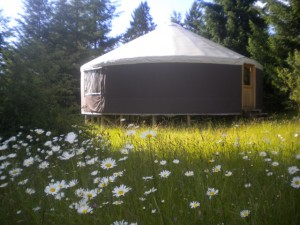 yurt and daisys